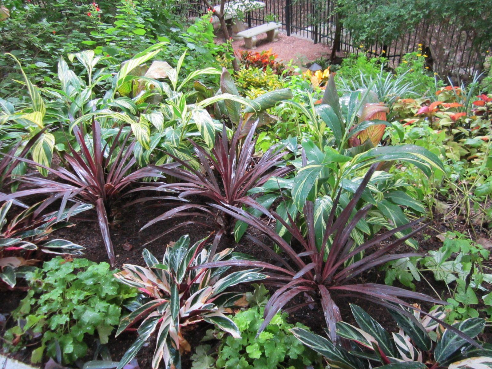 Shade Plants For Central Texas Lisa 39 S Landscape Design