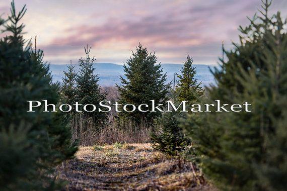 Christmas Tree Farm 2 Digital Background New England Etsy Tree Photoshop Tree Farms Christmas Tree Farm