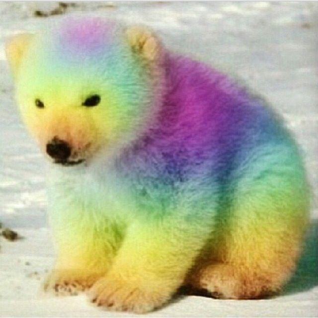 Rainbow Polar Bear Cute Baby Animals Cute Animals Colorful Animals