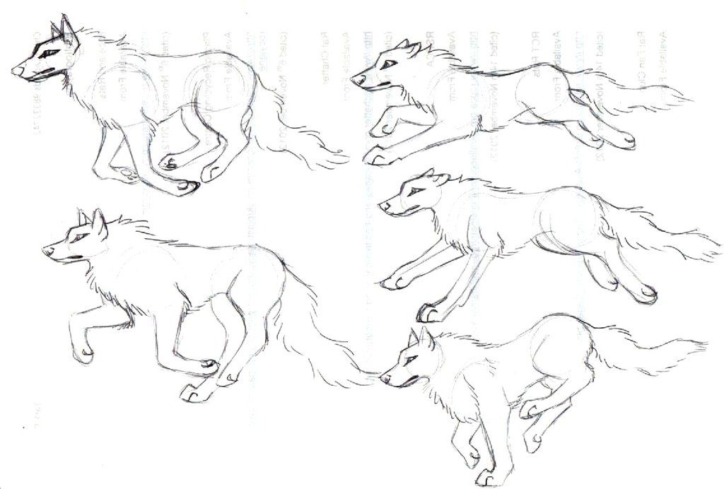 wolf front poses - 1024×692