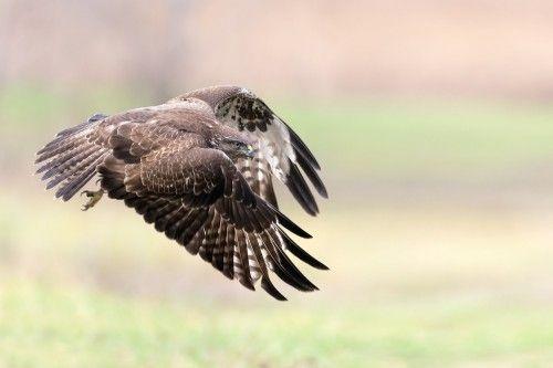 I fly away by Alberto Carati