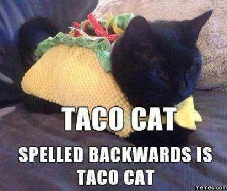 Un gato taco
