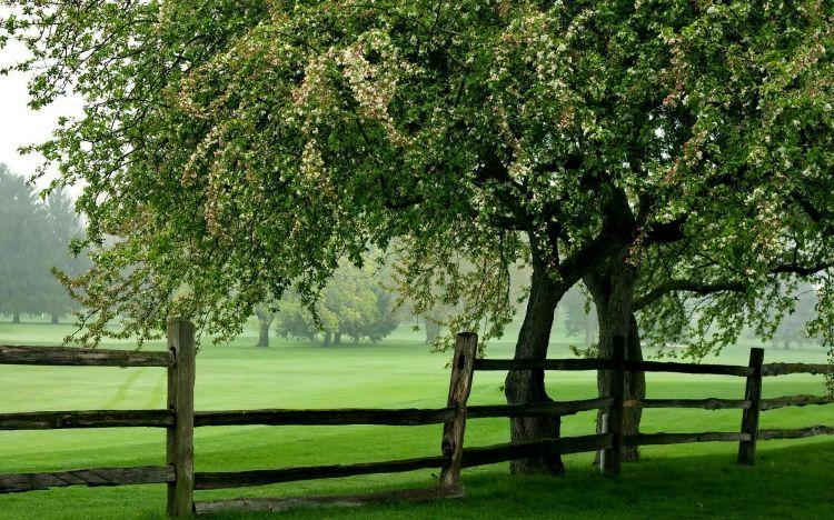 Fonds D Ecran Nature Fonds D Ecran Arbres Forets Cloture Autour De La Prairie Par Yushy Hebus Com Tree Fond Ecran Prairie