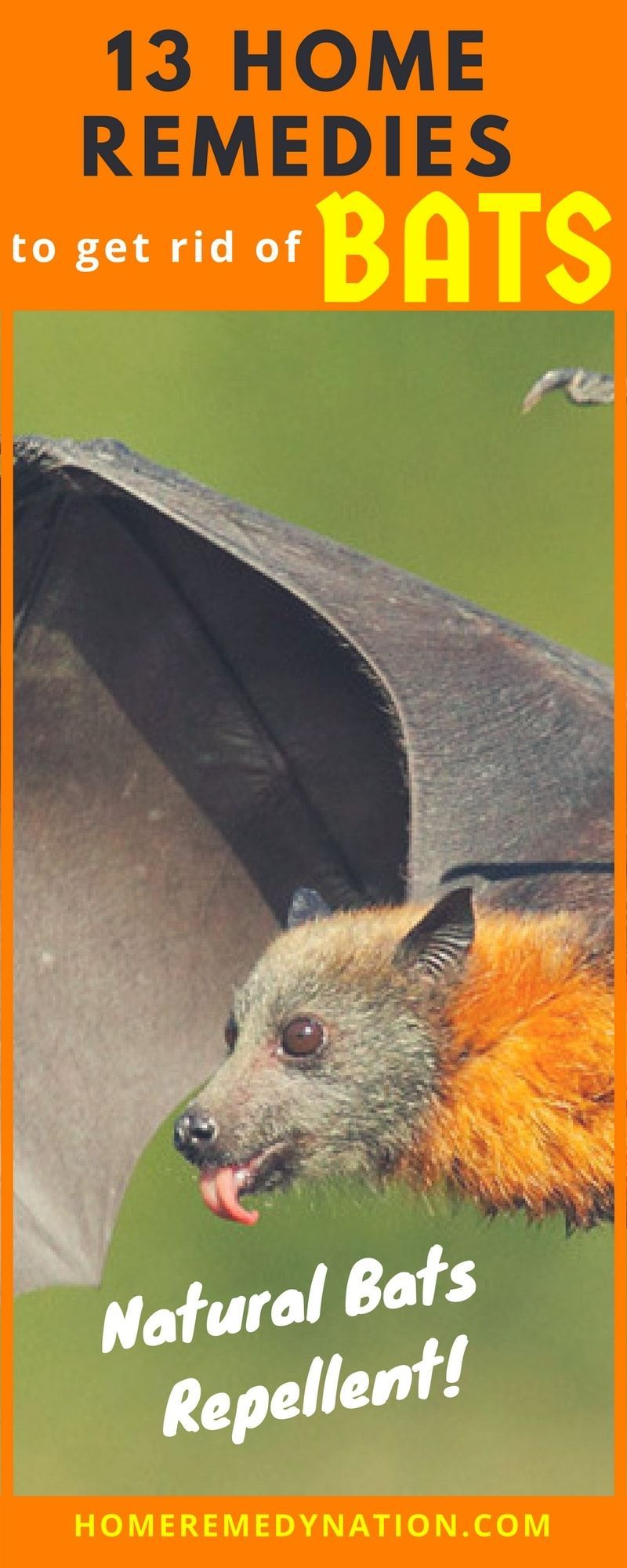 13 Evidence Based Home Remedies To Get Rid Of Bat Home