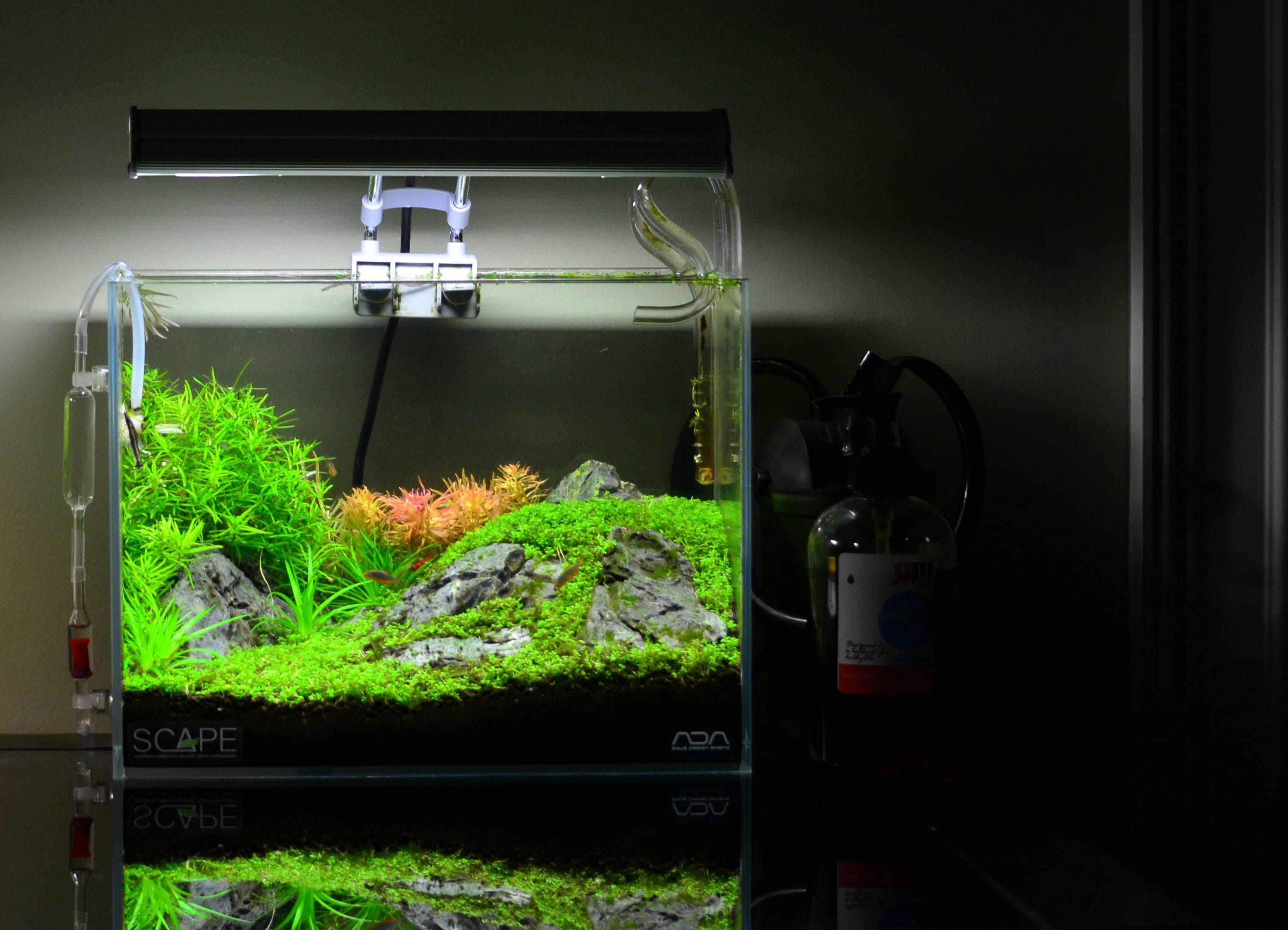 Do You Have Any Photos That You Always Enjoy Looking Back At Aquascape Aquascape Aquarium Tropical Fish Tanks