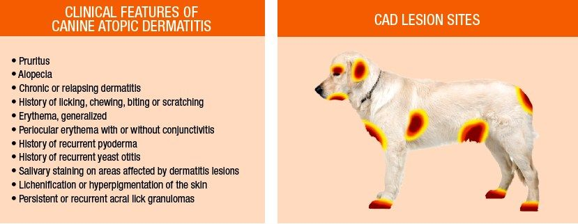 Our Website Provides Detailed Information About Hot Spots On Dogs And Also Ilrations To Help Educate
