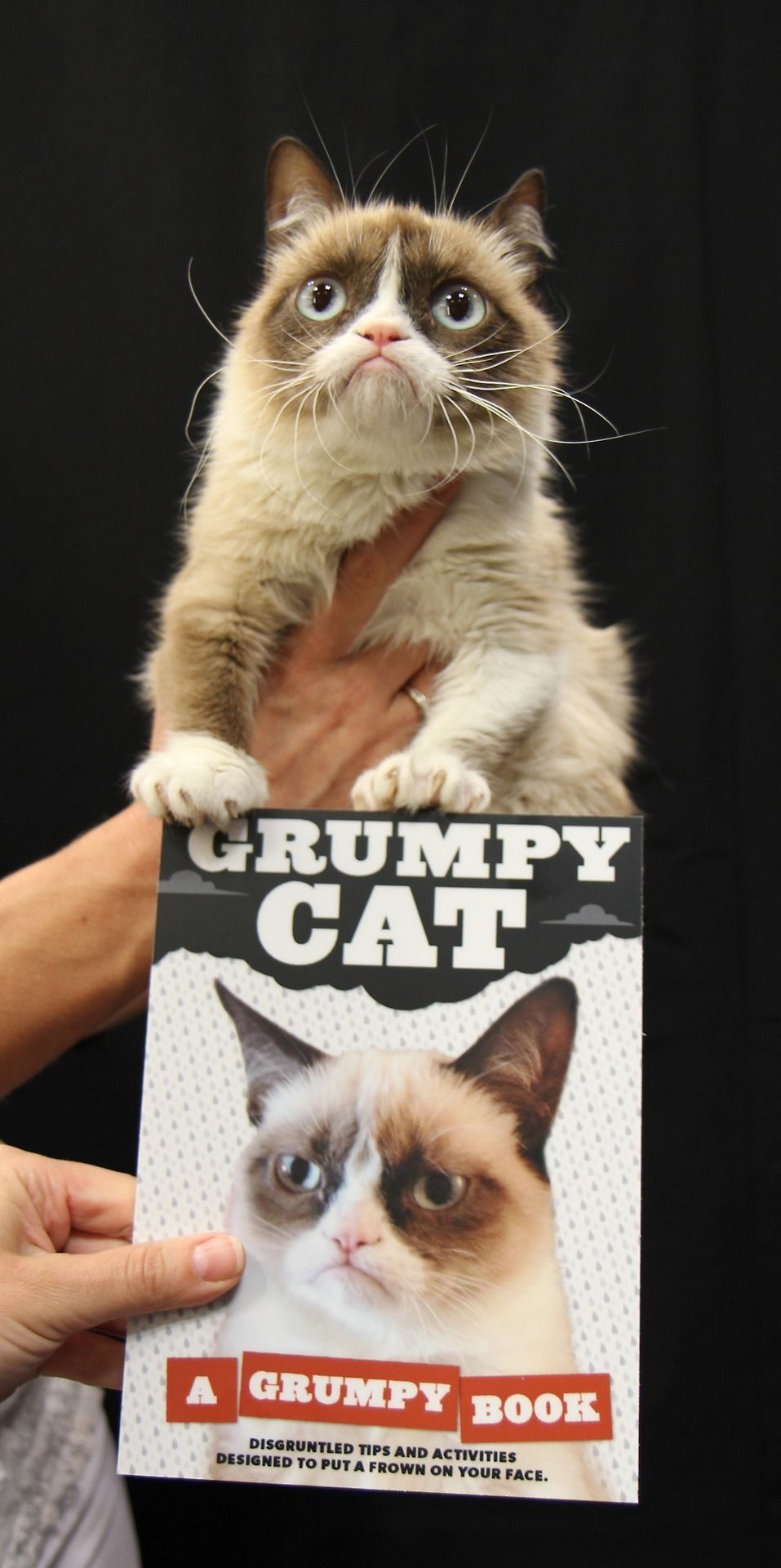 Tardar The Grumpy Cat Making Another Debut I Can T Wait For This Book It Is Going To Be Filled With Cuteness 3 Grumpy Cat Grumpy Cat Humor Grumpy Cat Book