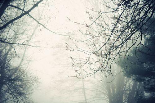 A Soundless Morning