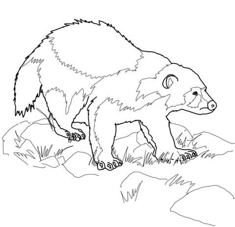 Mi Wolverine Animal Coloring Page From Wolverine Category Select