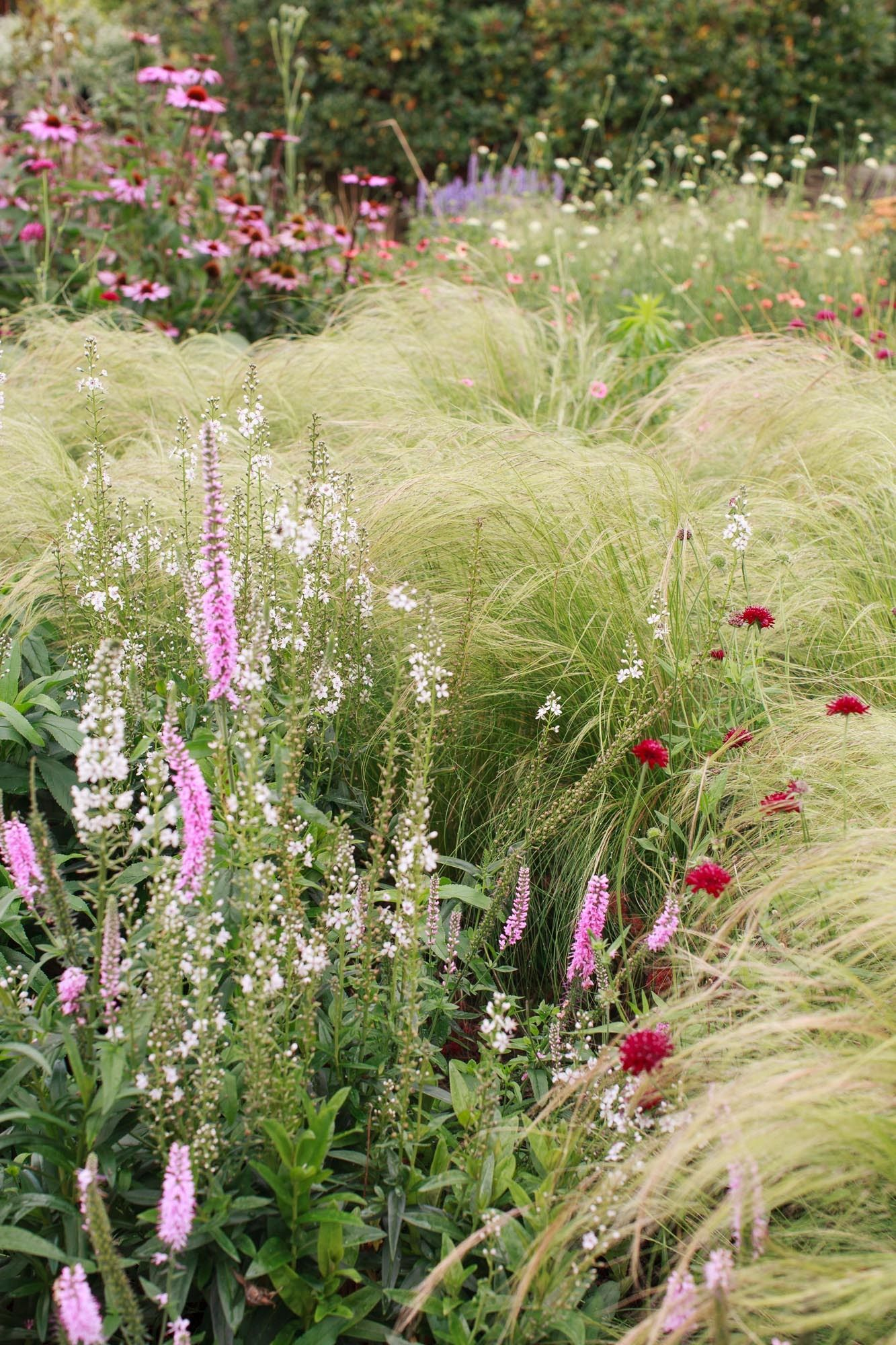 Grasses with veronica and scabiosa | photograph Amy Vonheim