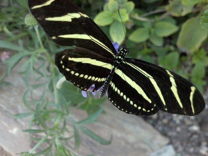 Winged beauty