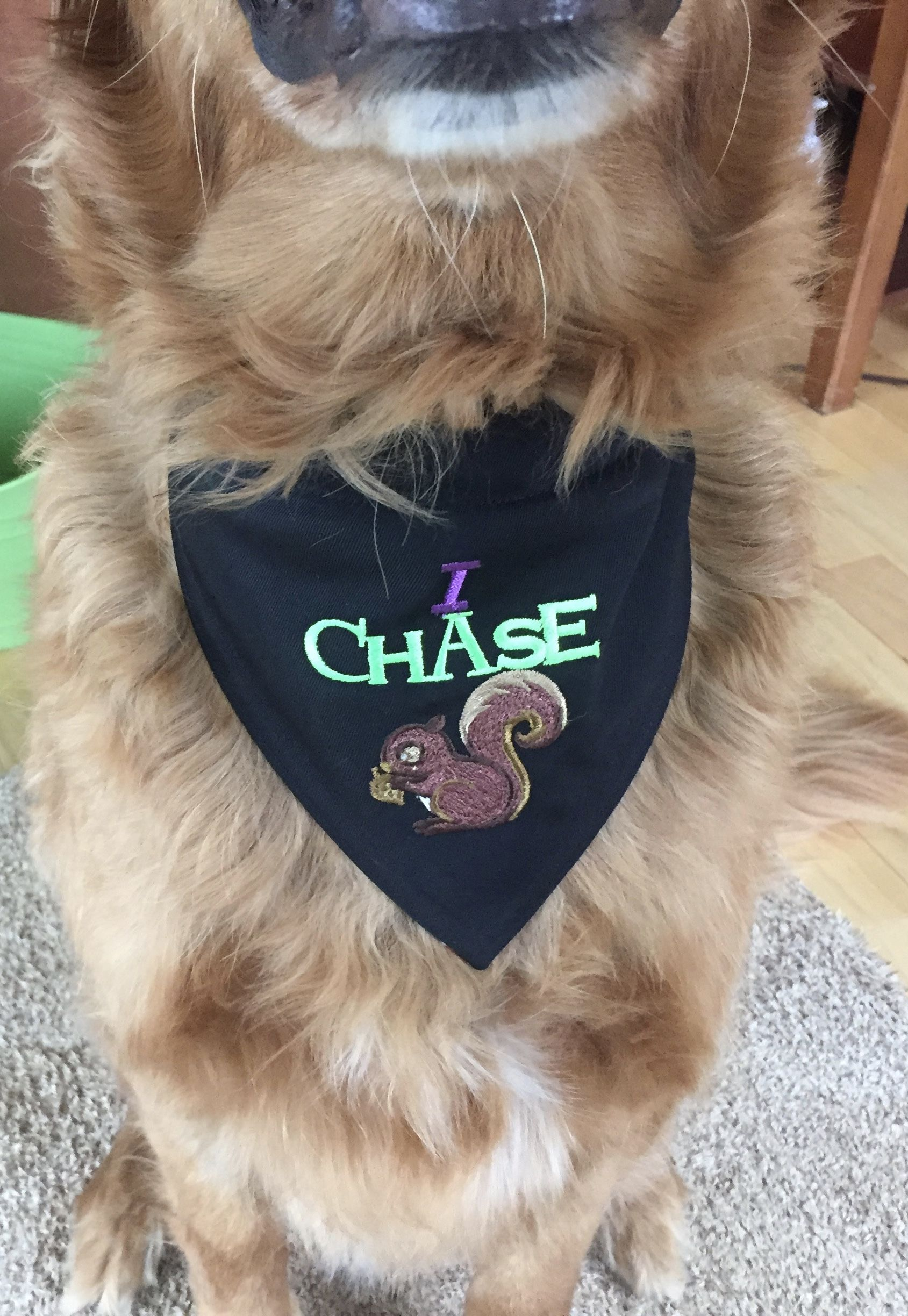 DIY Personalized Dog Bandana Sewing Tutorial - Looking for a gift for a dog  lover?