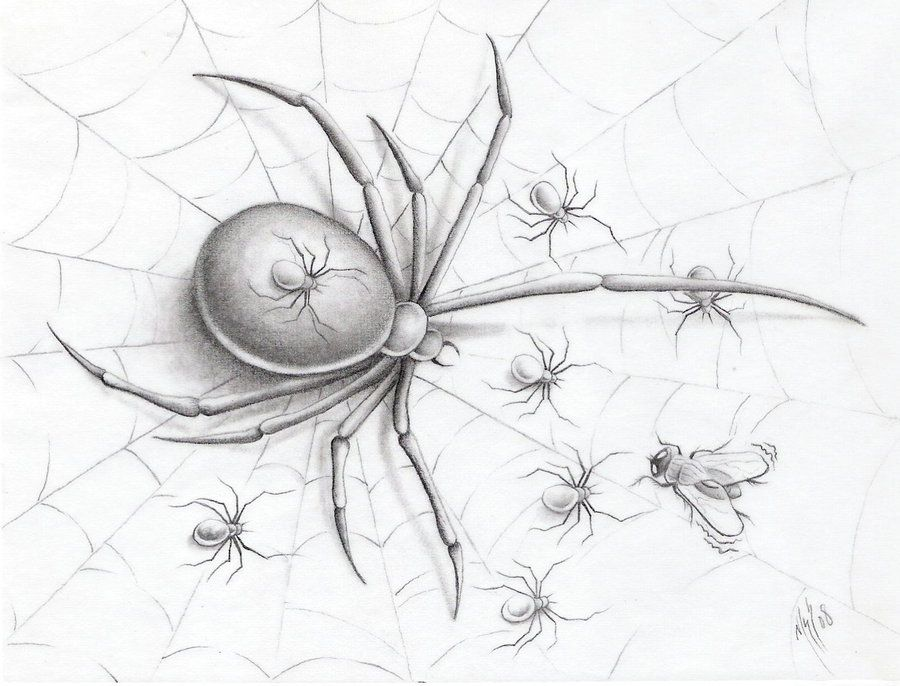 FUCT by markfellows on deviantART spider baby fly web ...