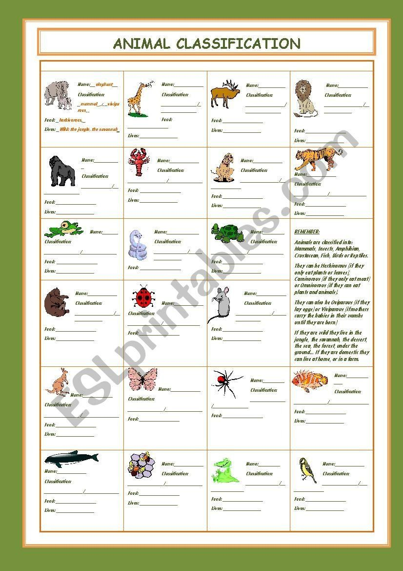 Free Animal Classification Worksheets Animal Classification Esl Worksheet  by Cristinasu… in 2021   Animal classification [ 1169 x 826 Pixel ]