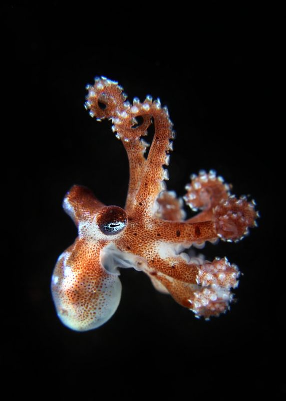 #octopus by Alan Lo