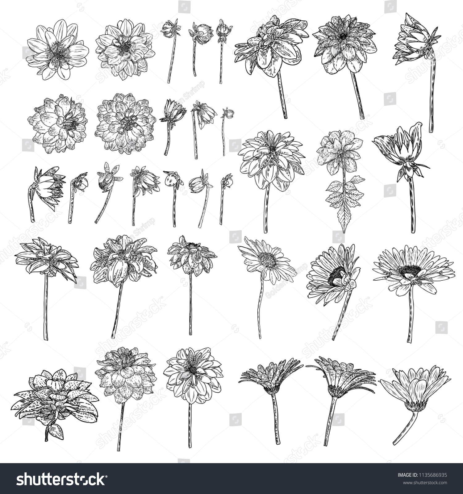 Gerbera Daisy Coloring Page Free Printable Coloring Pages Daisy Drawing Daisy Flower Drawing Flower Drawing