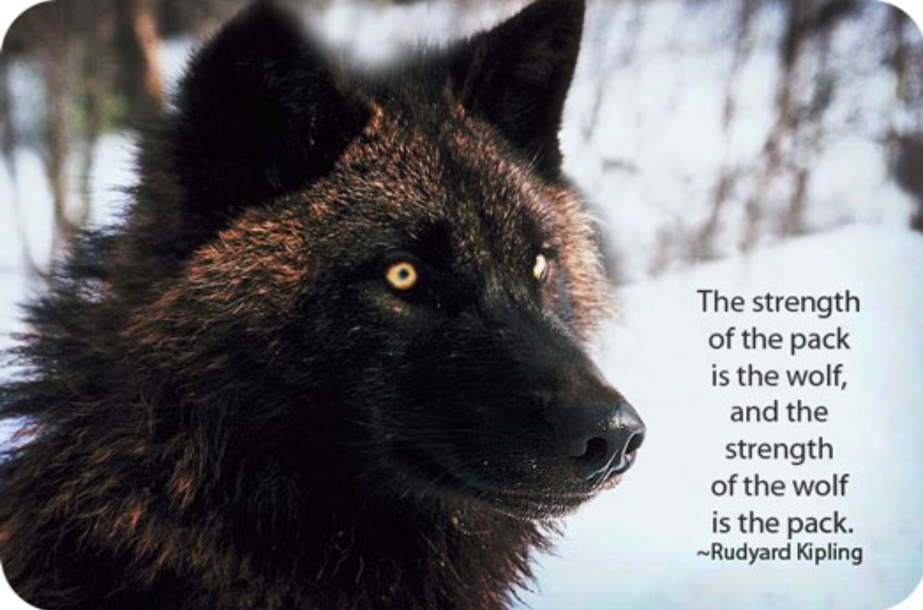 Pin by milly on beautiful creatures pinterest wolf animal and dog totem wolf symbols wolf meaning and symbolism biocorpaavc