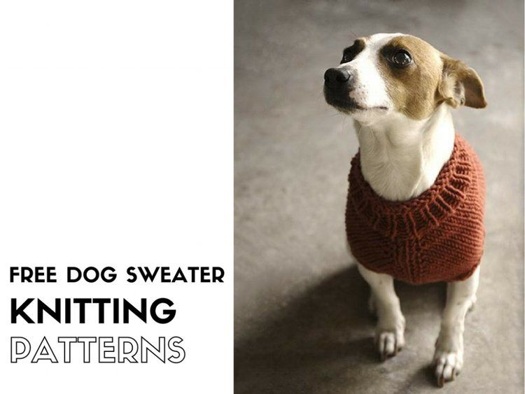 10 Stunning Examples Of Beautiful Fall Dog Sweaters   Sonstiges ...