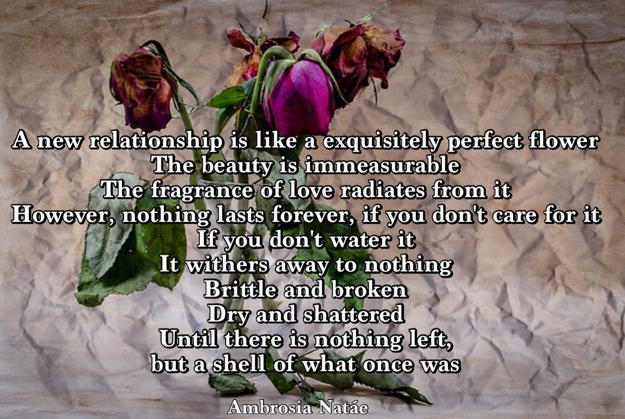 Poetry, Prose, Quotes, rose, flower, relationship, love, withered