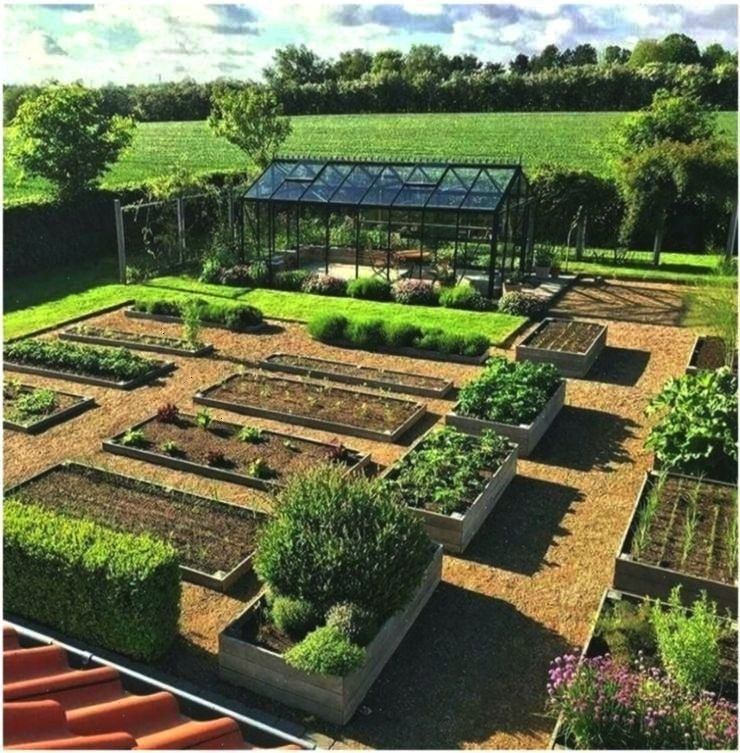 Vegetable Garden for Beginners Rustic Vegetable Flower Pl  Anf Caution when watering only watering not drowning This brings us to the next point plants need enough water...