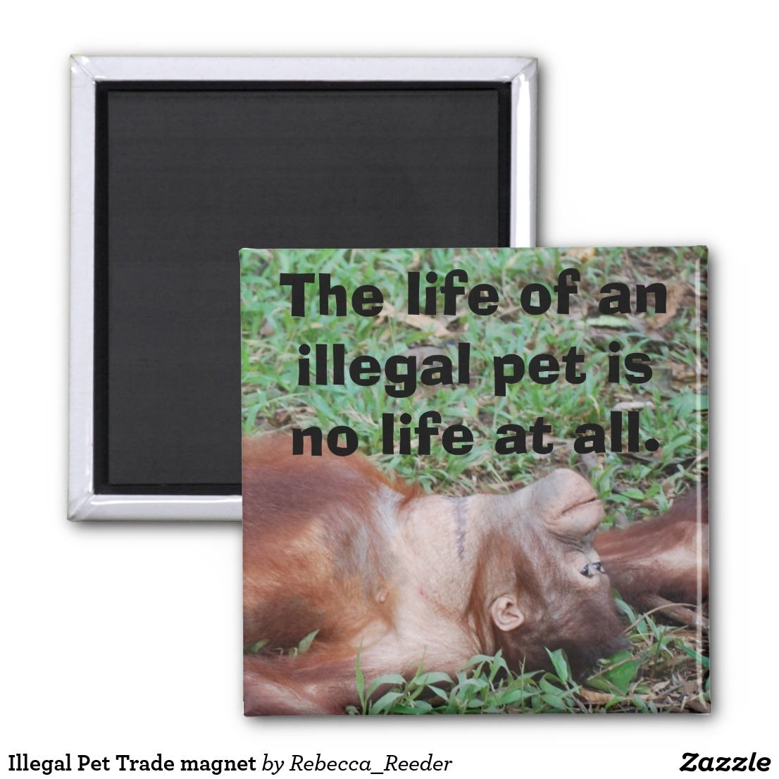 Illegal Pet Trade (With images) Pets