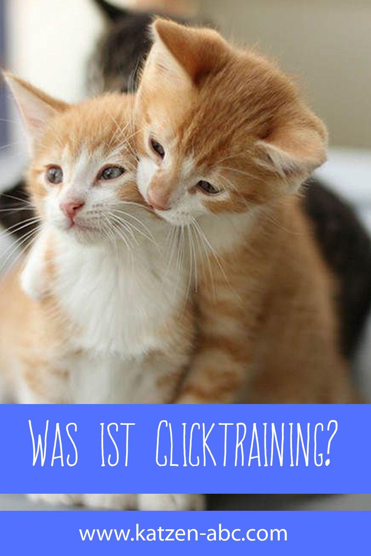 Was ist Clicktraining? | Katzen, Katzenhaltung