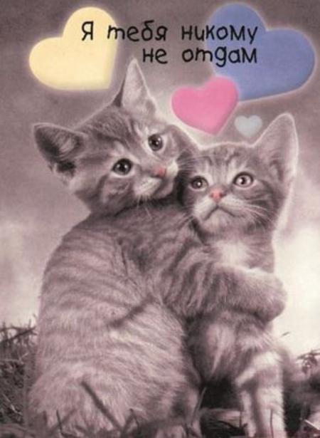 всегда картинка котята люби меня как я тебя люблю это национальный