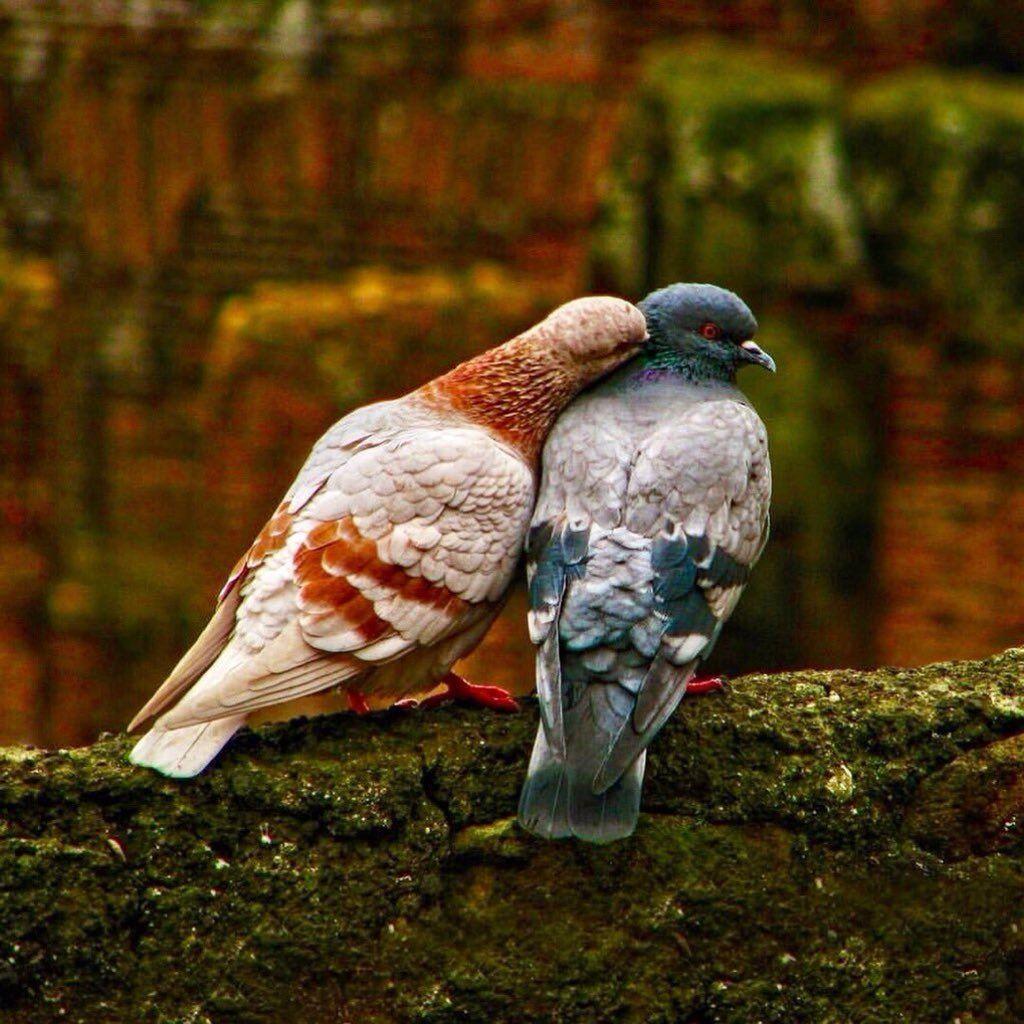Птицы и животный мир европы фото