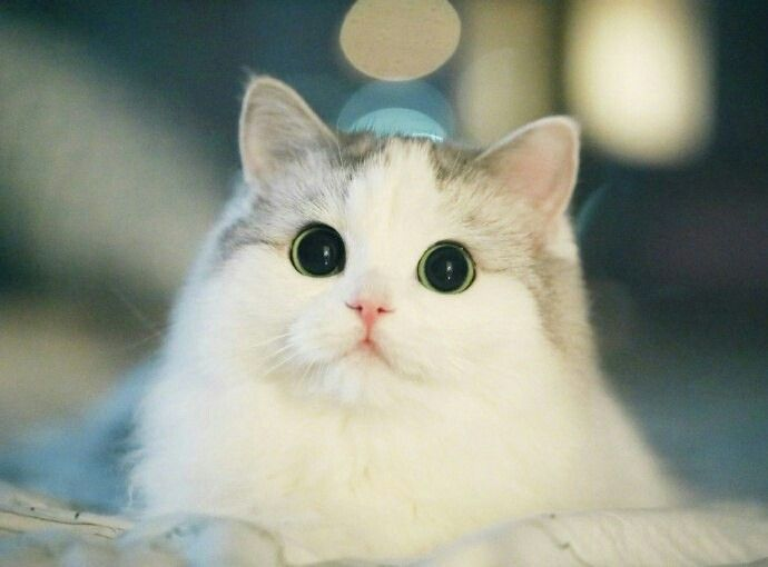 This cat looks like a Cute cats and kittens, Cute
