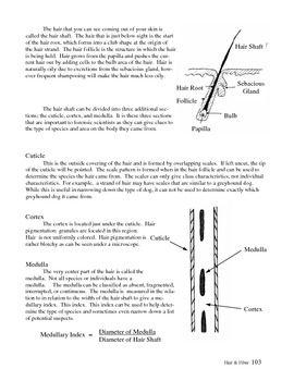 Forensic Science: Fiber Evidence Review Worksheet | TpT