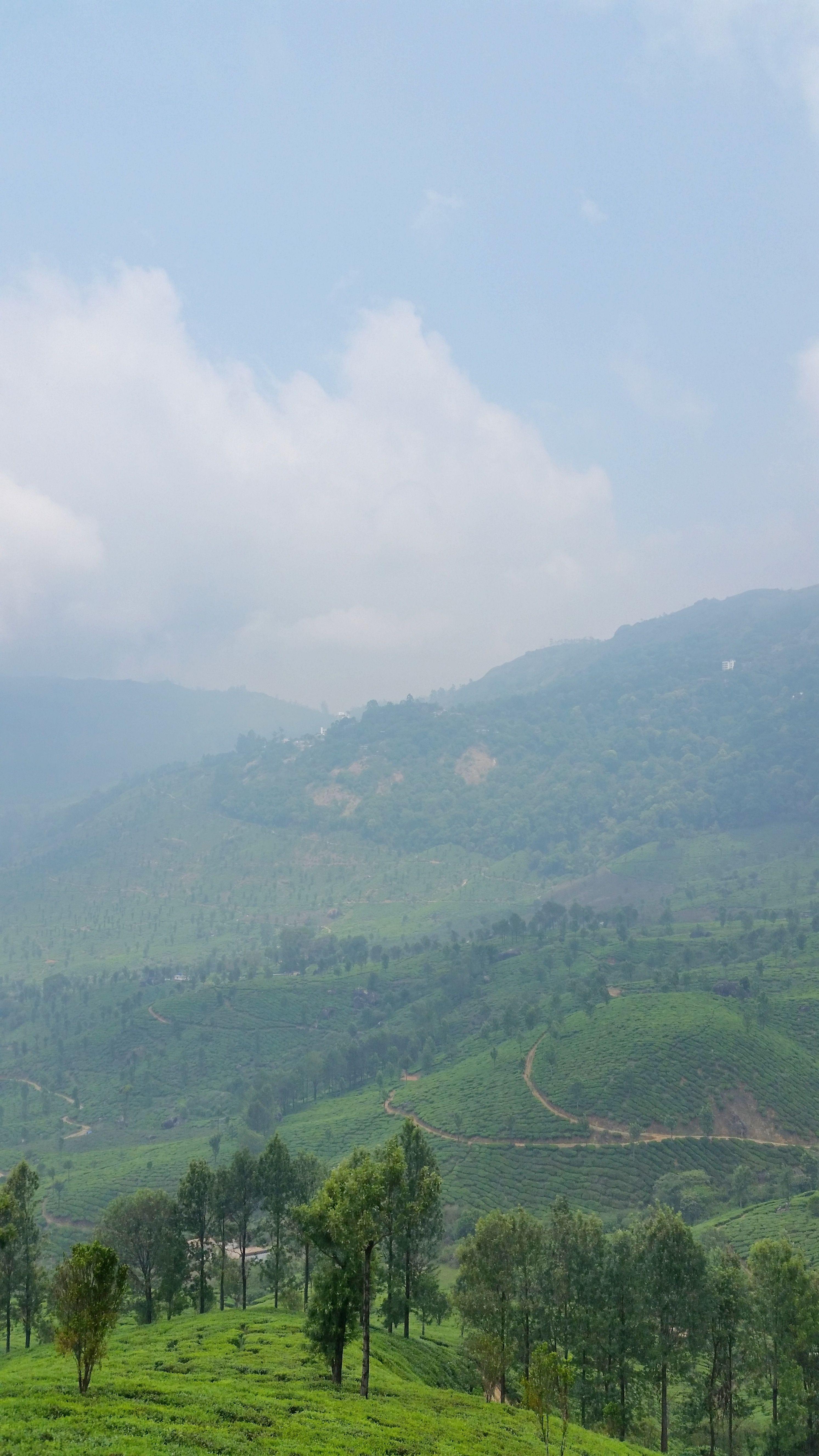 Munnar Kerala tea plantation trek