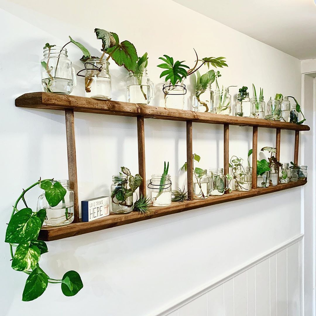 "The Plant Shack on Instagram: ""When you have an extra ladder, 49 extra jars, plant clippings, and a narrow hallway - just combine them!  Ladder made by: @blackdogwood1…"""