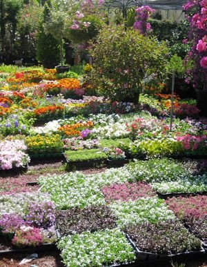 All The Pretty Nurseries Nothing New But