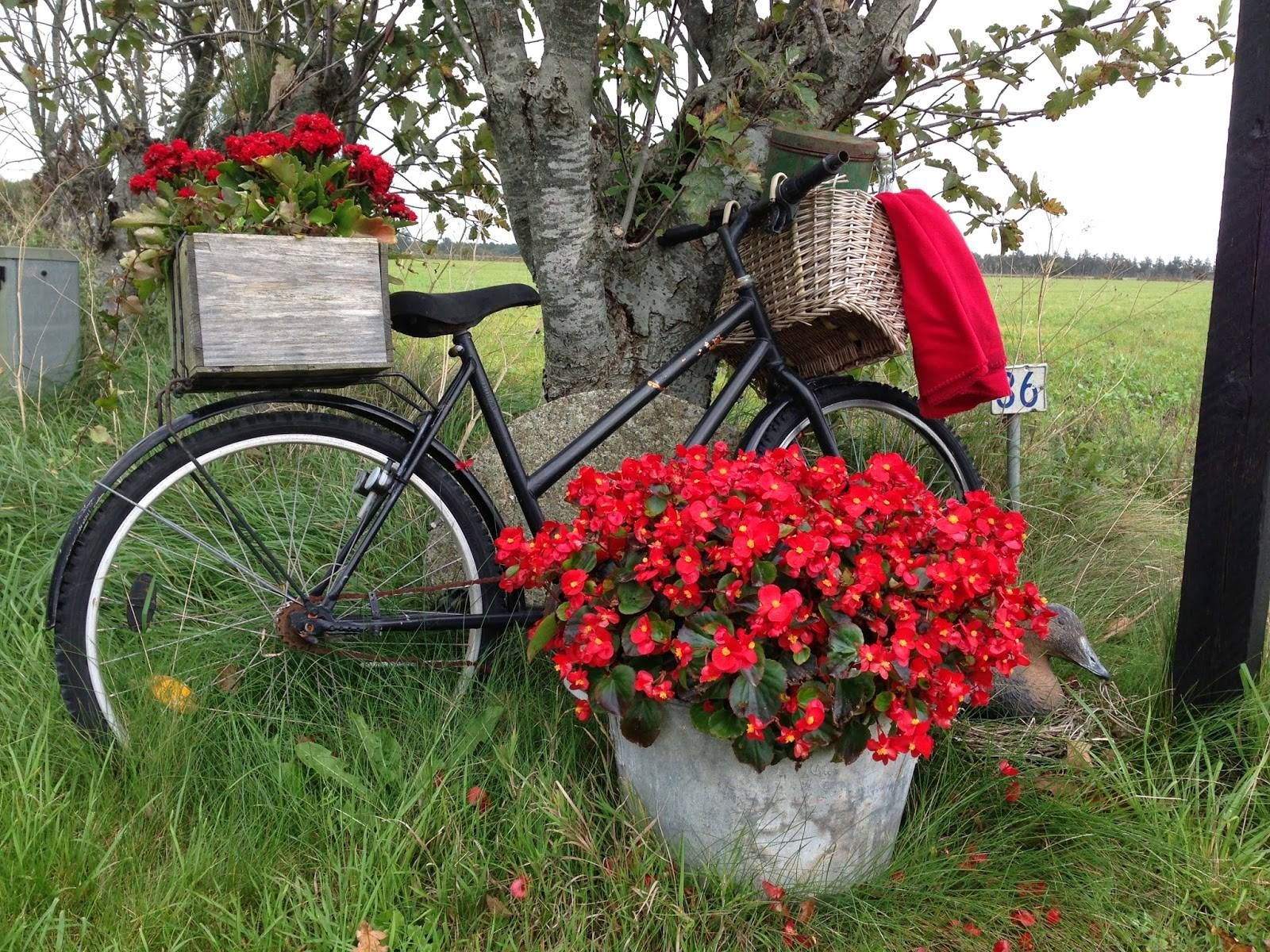 Garden decor bicycle  Pin by Marie Lafaye on Jardin  Pinterest  Bicycling Flowers and