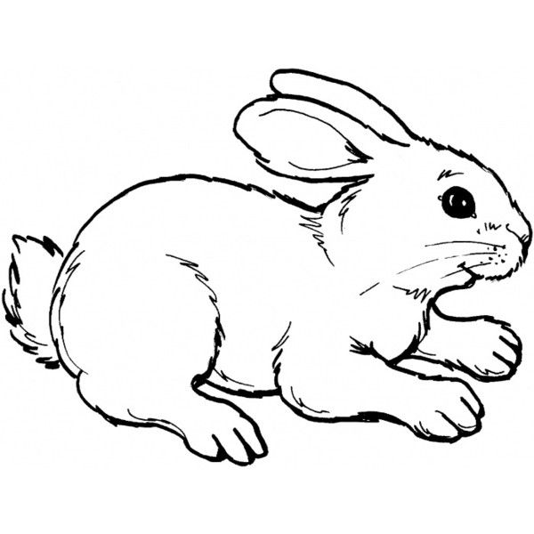 Rabbit 8 coloring. Select from 14516 printable coloring pages of ...