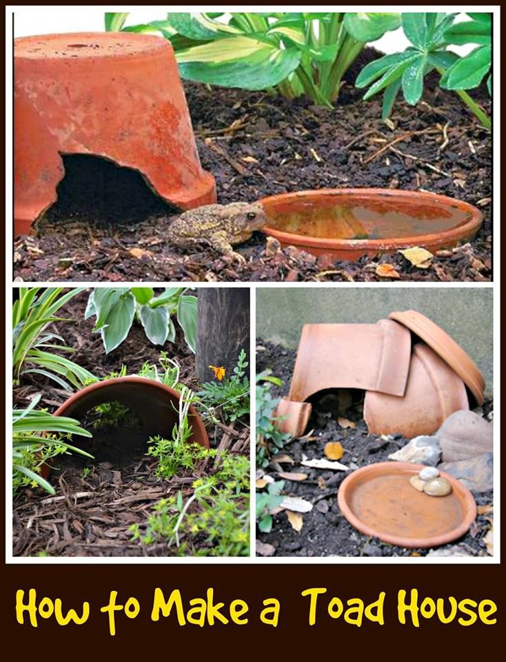 Charmant How To Build A Toad House