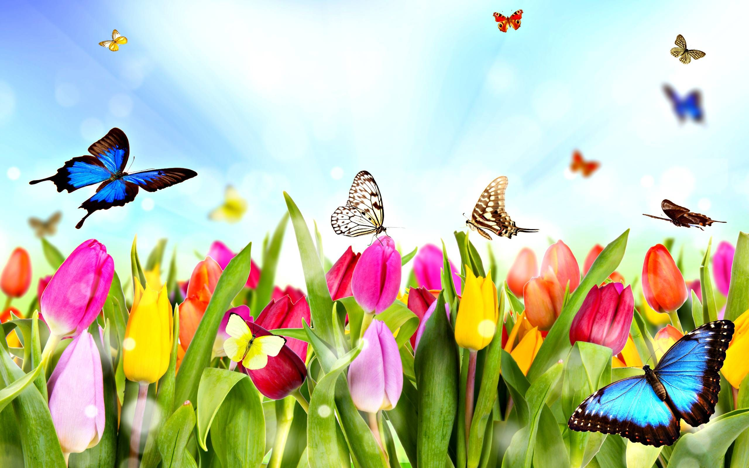 Free screen wallpaper for spring time mobile compatible spring