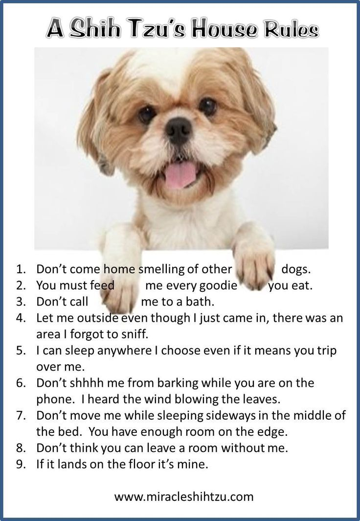 Our Favorite Dog Quotes Dog Quotes Shih Tzu Puppy Shih Tzu Dog