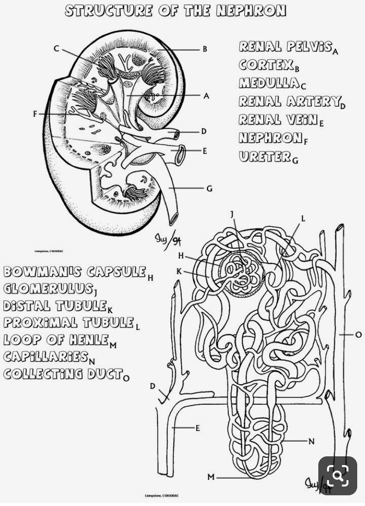 Pin By Thais Correa On Biology Anatomy Coloring Book Anatomy And Physiology Teaching Biology