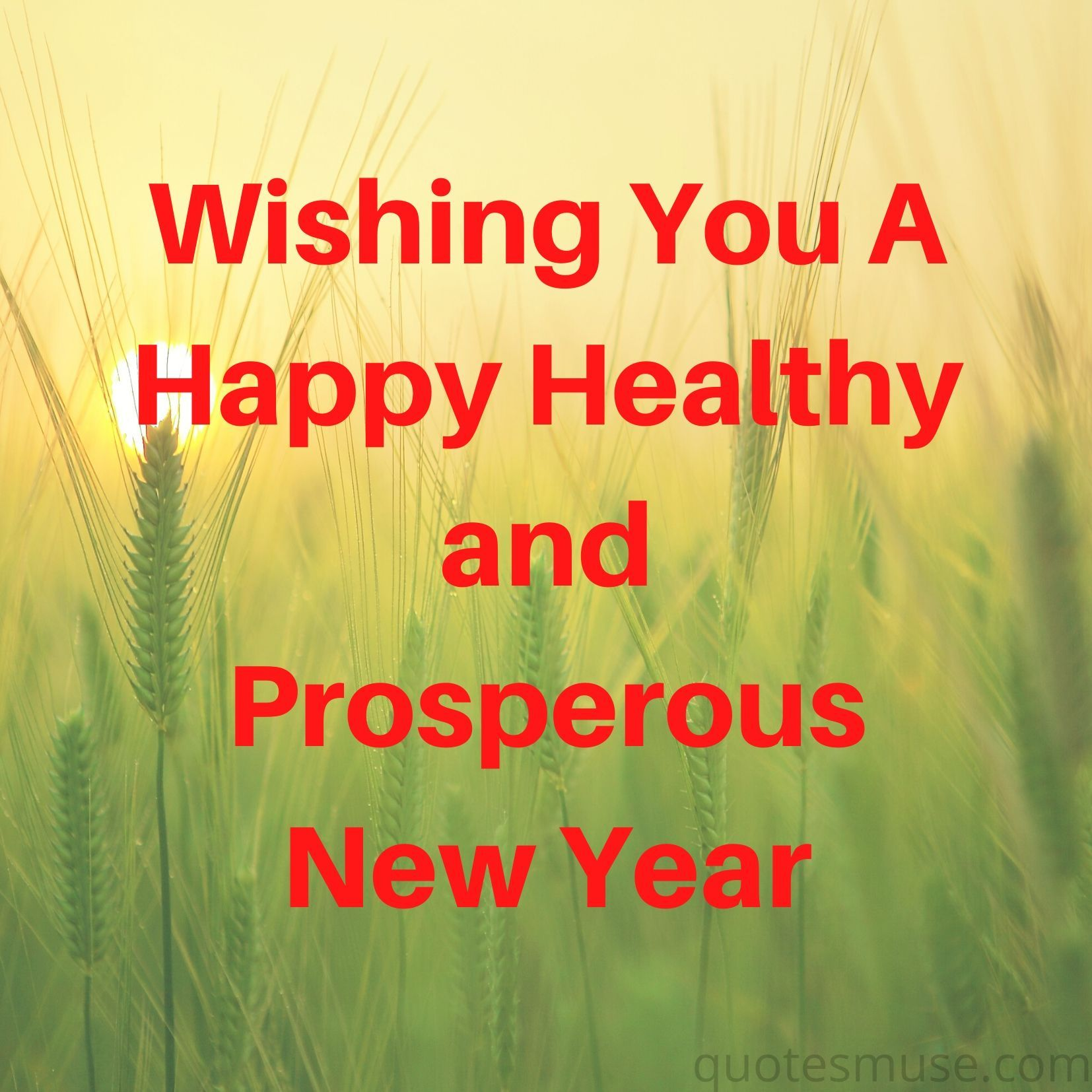 Wishing You A Happy Healthy and Prosperous New Year