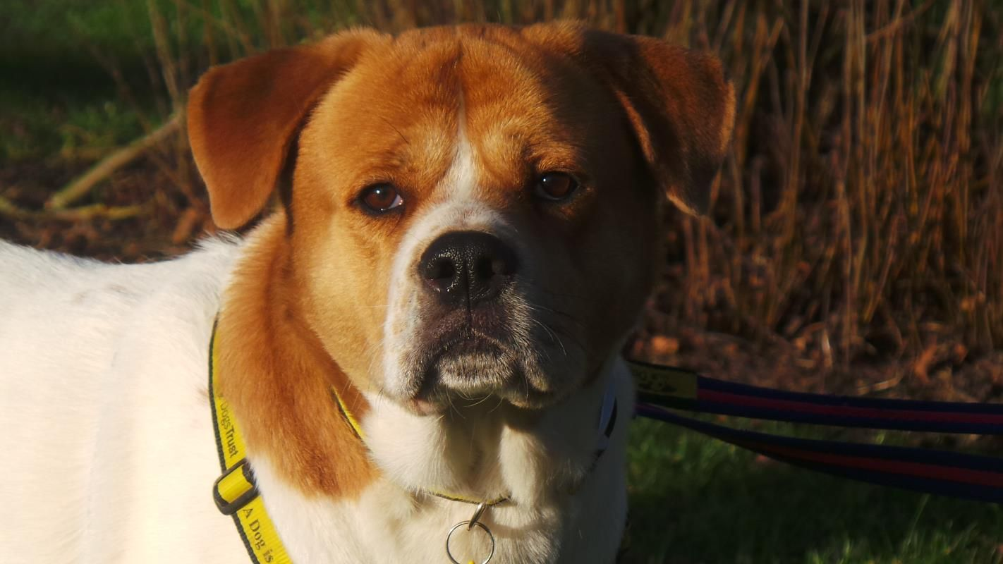 Adopt A Dog Oscar A Crossbreed Dogs Trust With Images Dog Crossbreeds Dogs
