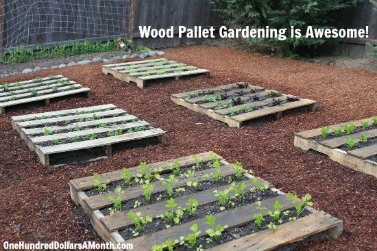 diy wood pallet garden spinach lettuce celery strawberries and boy choy - Garden Ideas Using Wooden Pallets