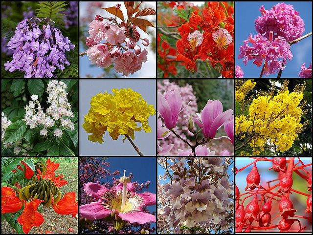 Most Beautiful Flowering Trees Close Up Flowering Trees