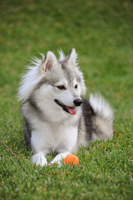 Untitled Cute Animals Dogs Dogs Kids