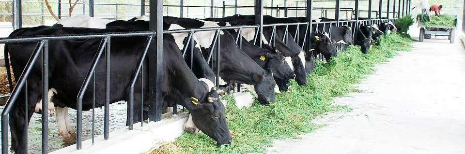Pin by sandeep mehta on hi tech dairy farm Dairy farms