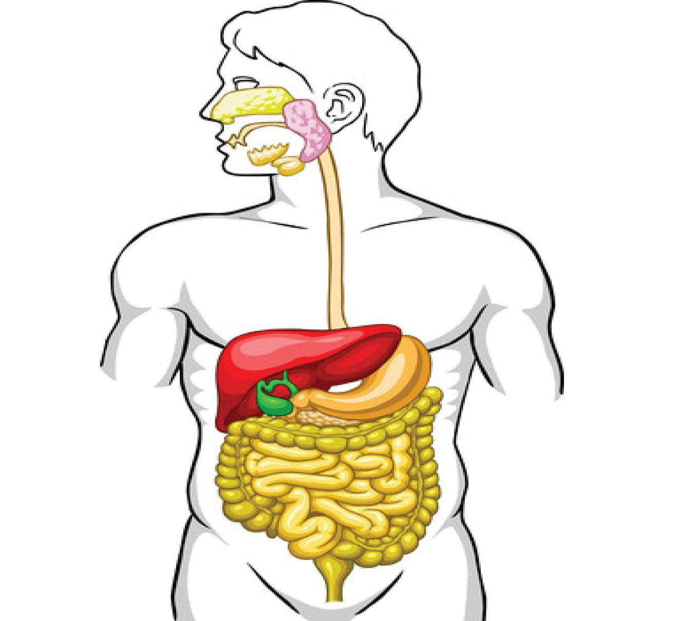 The Gallbladder Bile And Gallstones Olm Feed Latest Posts