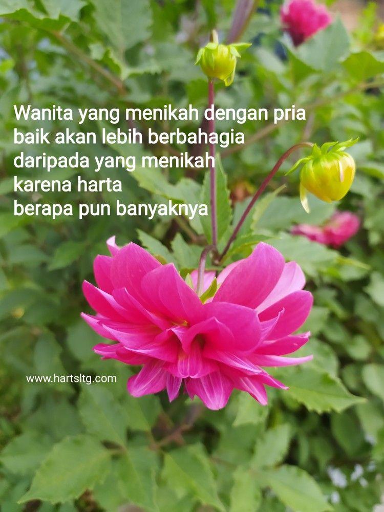 Kata Bijak Bijak Kata Kata Indah Bunga Cantik