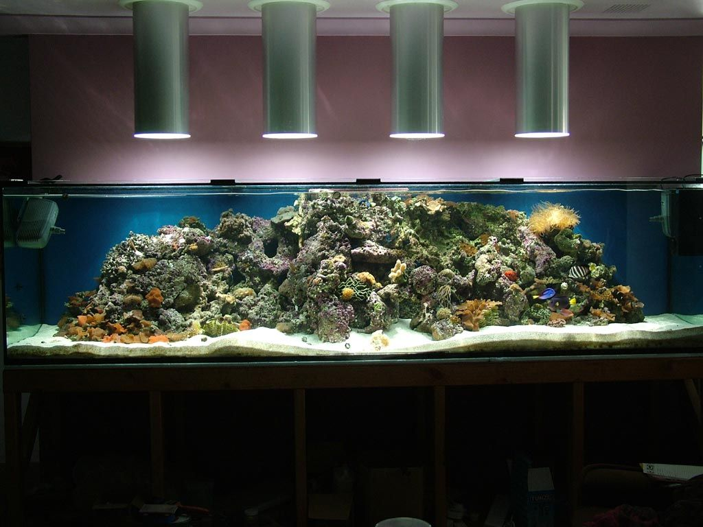 Fish tank vs aquarium - The Fish In This Aquarium Benefit From Being Exposed To Natural Light Solatube Daylighting Systems Bring In Sunlight From Outside