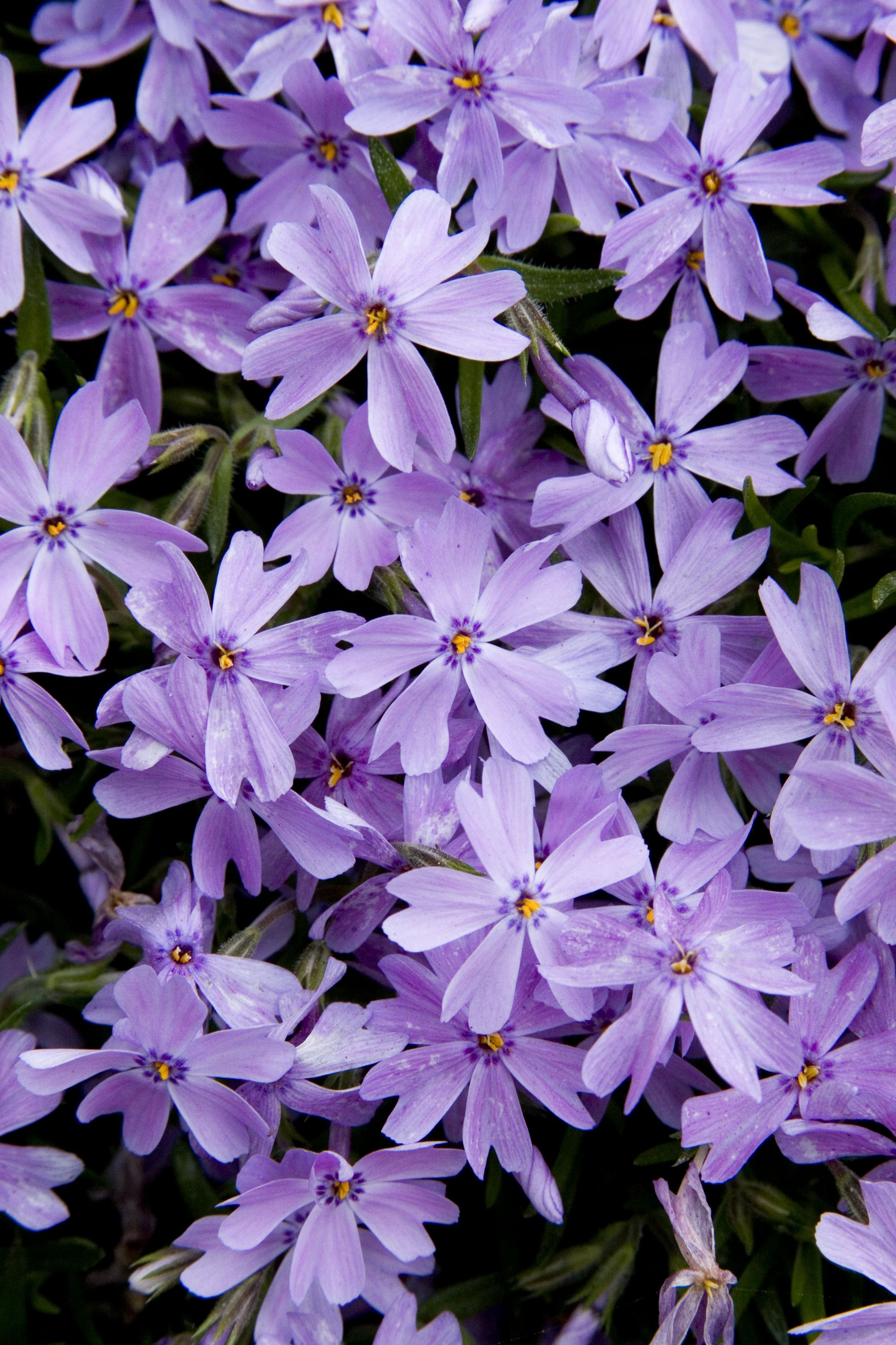 Allweather perennial plants you would love creeping