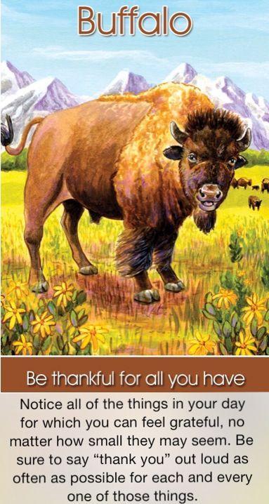 Be thankful  Buffalo spirit guide  Buffalo totem animal  My
